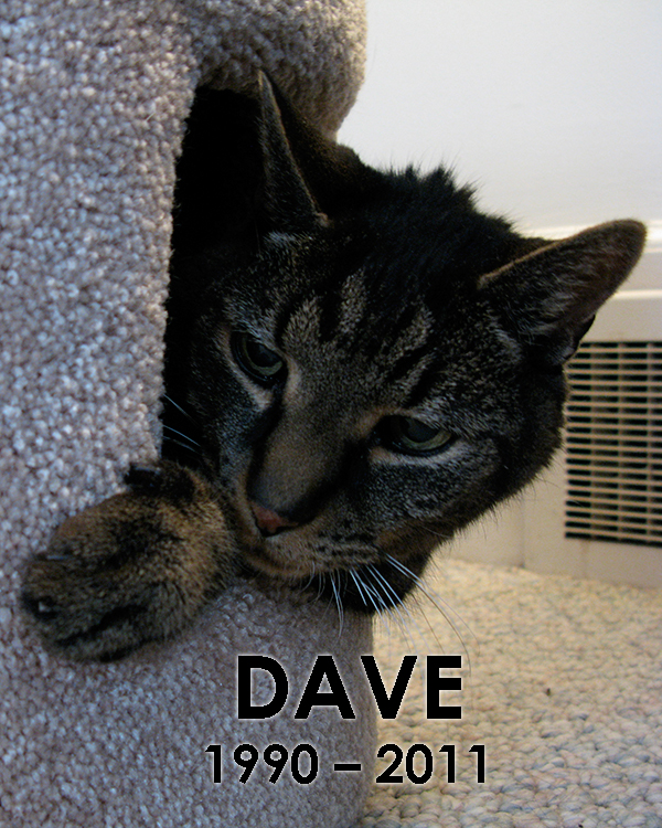 Dave, in his cave.