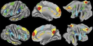 popular_science_brain_scans